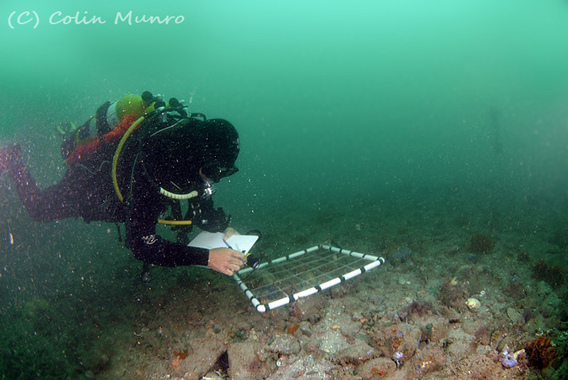 A Marine Bio-images diver conducts species counts within random quadrats on the seabed in Lyme bay, Southwest England.
