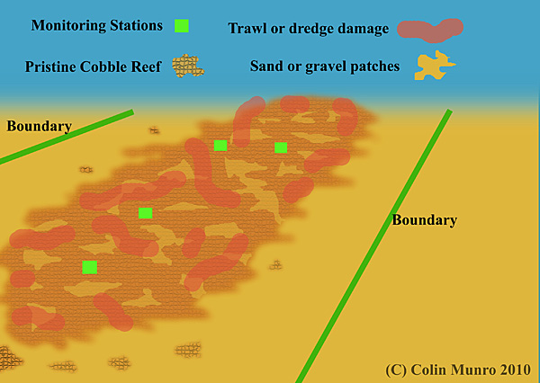 Lane's Ground Reef is a linear reef, running east-west, composed of a matrix of boulder reef patches interspersed with sand and gravel patches. marine Bio-images