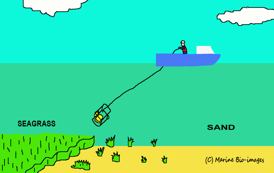 Diagram illustrating Marine Bio-images' drop/towed camera system in operation.