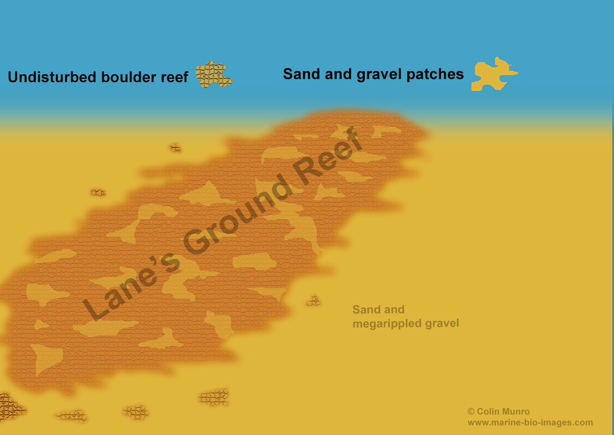 A diagram of Lane's Ground Reef, Lyme Bay, before damage from scallop dredging.