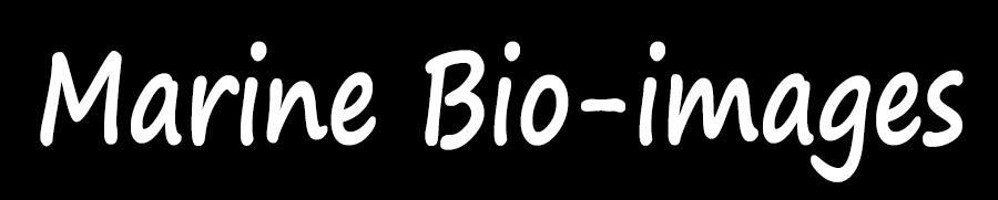 Marine-Bio-Images